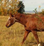 Cheyenne- Sponsored by Paula Crane