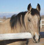 Montana – Adoption Pending