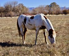 Rainbow – Sponsored by Sherry Kammerer !!!!! Awaiting a Forever Home