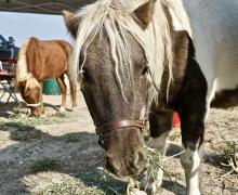 Chuck!!  Sanctuary Horse!!